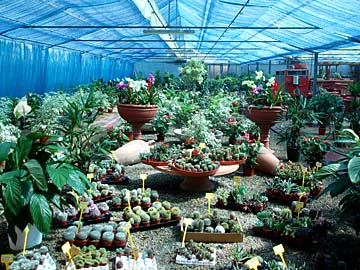 ein Gärtnerei mit Kakteen in Rotonto auf Sardinien, Italien