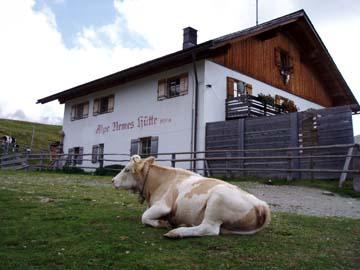 auf der Alpe Nemes, Südtirol