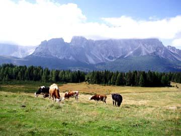wieder an der Aussicht von der Alpe Nemes, Südtirol