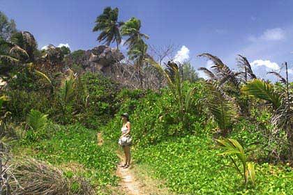 Ein Dschungelpfad im Süden von La Digue