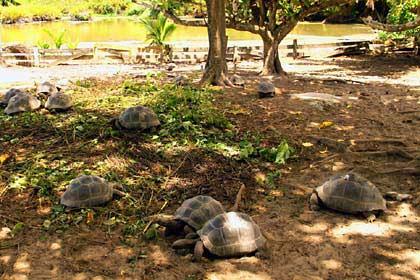 Die Riesenschildkröten Aufzuchtsstation auf Silhouette