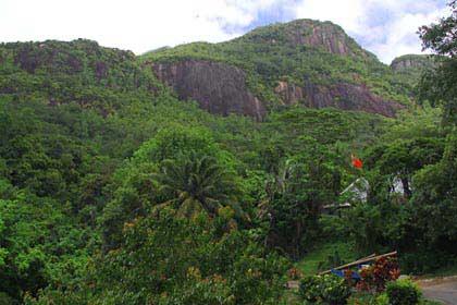 Üppiger Urwald im Inneren des Morne Seychellois Nationalparks auf Mahe