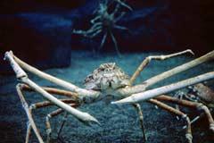 Die Unterwasserwelt Singapur
