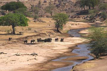 Ausblick auf den Tarangire Fluß und einige Elefanten