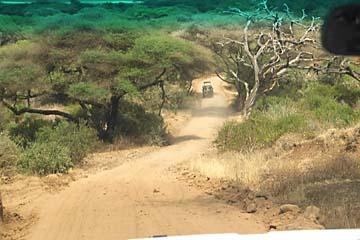Abenteuerliche Pisten im Lake Manyara Nationalpark