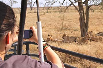 Wir sind nah dran an einigen Löwen in der Serengeti