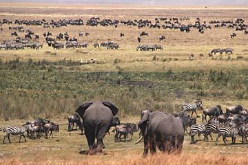 Ngorongoro Krater in Tansania - Tiervielfalt wie im Paradies