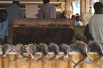 Thunfischer jeder Größe im Hafen von Dar es Salaam in Tansania