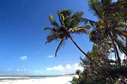 Palmenstrand auf der Insel Sansibar in Tanzania