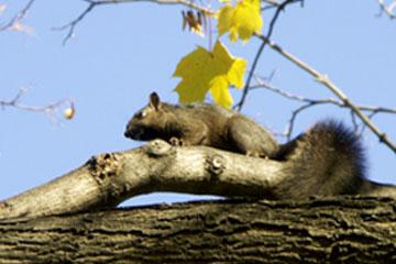 Eichhörnchen im Queen's Park, Toronto, Kanada