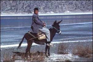 junger Türkei auf einem Esel, Türkei
