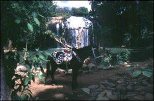 die Cam Ly Wasserfälle in Dalat, Vietnam