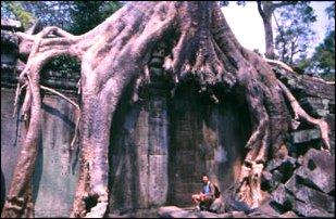 Riesige Bäume und Wurzeln in Ta Prohm in Angkor, Kambodscha