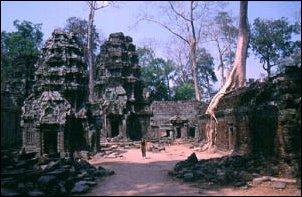 Die beeindruckenden Tempel von Ta Prohm in Angkor, Kambodscha