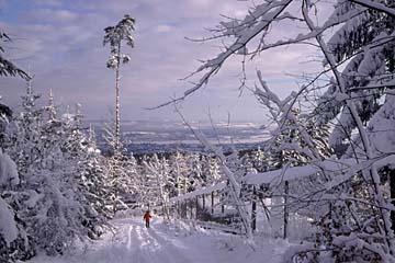 der Zürichberg bei Zürich in der Schweiz im Winter