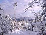Schöne Schweiz auf dem Zürichberg im Winter